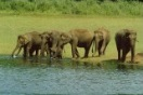 Thekkady is one of the best tourist place in Kerala